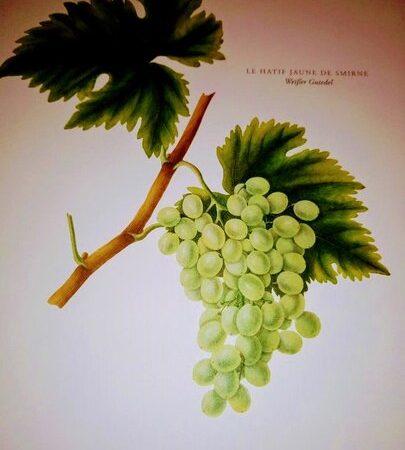 Bed & Wine Shop Weinkalender Juli